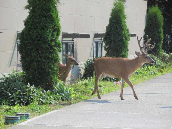 Wildlife voor ons hotel